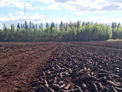 idan-metsakone-palaturve-kentalla-kuivumassa